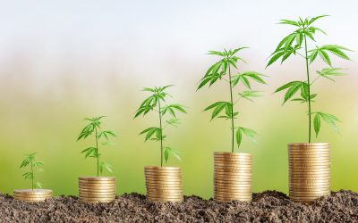 Raising Funds for Cannabis Businesses with Arcview